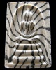 รางวัลที่ 1 ตะกรุด 3 ดอก สมเด็จลายเสือเศียรบาตร หลวงพ่อแพ วัดพิกุลทอง ปี 39 สวยกริบ เชิญชมทุกมุมครับ